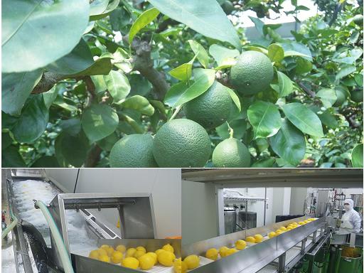 農産物の加工(6次産業化)のイメージ