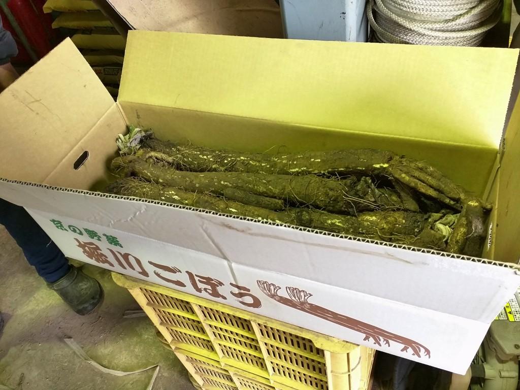 堀川ごぼう-京野菜-