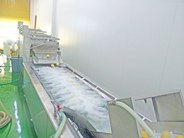 長浜工場洗浄1